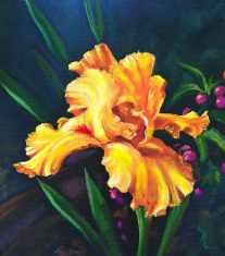 MarkMenendez-Golden-Iris-Oil