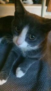 Kattige 2