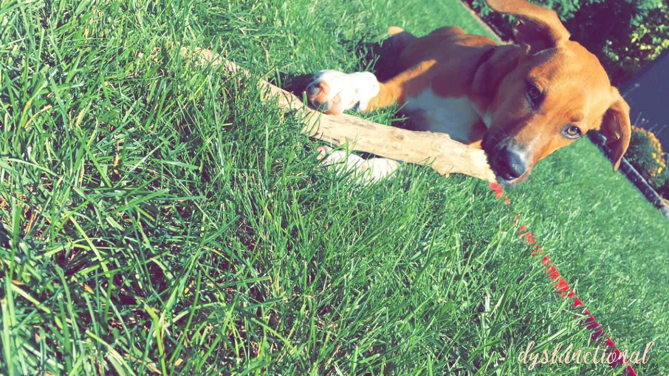 lola with her stick summer 2015