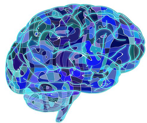 Quand le cerveau garde le contrôle