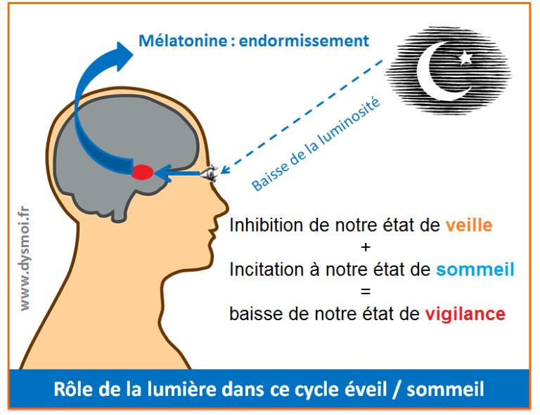 Dossier sommeil : cycle éveil-sommeil (partie 2)