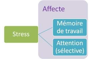 impact du stress sur l'apprentissage : mémoire de travail