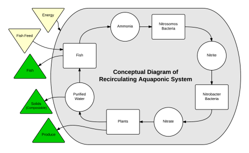 small resolution of aquaponics system diagram