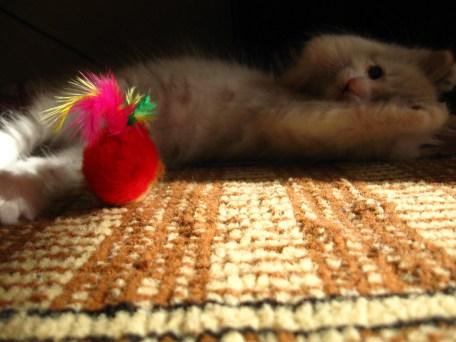 Rușinos, anihilînd șoarecul