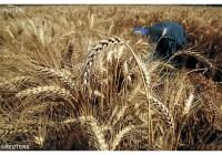 Словаччина: ферма для безхатченків
