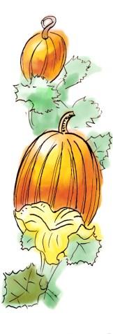 pumpkinsvertical2