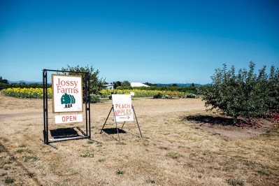 August 2016, orchards at Jossy Farm, Hillsboro, OR.