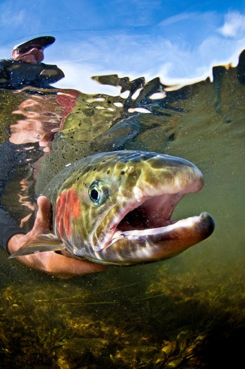 JULY_AUGUST_2017_JOHN-DAY-STEELHEAD_ARIAN_STEVENS_08_154045_DSC_8935_ed1-2