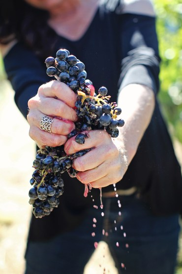 Rachel Martin squeezing grapes at Red Lilly Wine