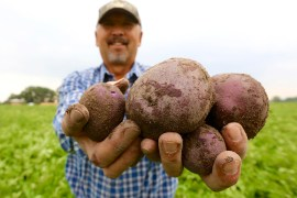 Oregon Potatoes