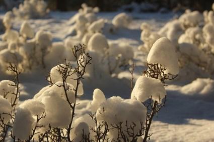 HoM-Snow-Mushrooms