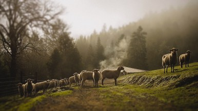 1859-Jan-Feb-Pachamama-Farm-Bradley-Lanphear-70