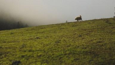 1859-Jan-Feb-Pachamama-Farm-Bradley-Lanphear-73