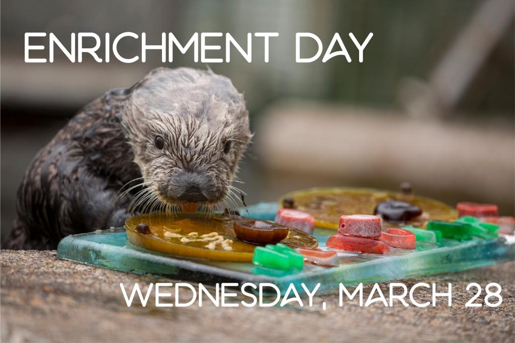 Enrichment Day