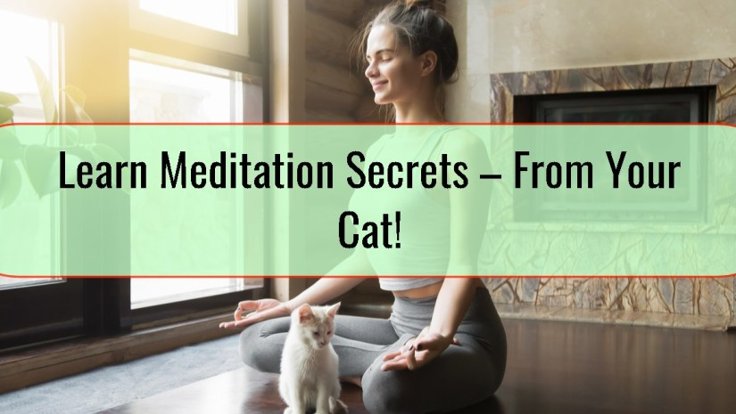 Learn Meditation Secrets – From Your Cat!