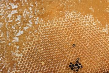 honeycomb-1564957_1280