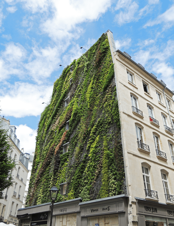 vertical-garden-by-patrick-blanc-at-paris-design-week-04