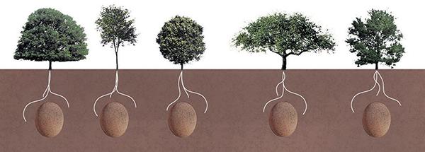 biodegradable-burial-pod-capsula-mundi-02