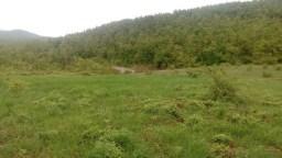 Данило Илић: Горња парцела од око 5 хектара