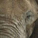 Elefanternes Dag 2014