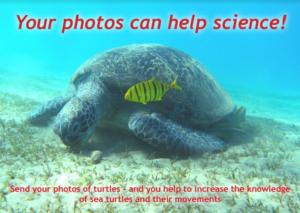 Turtle survey postkort