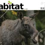Habitat #18