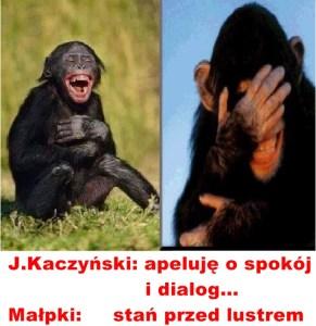 Kaczyński - małpy 4