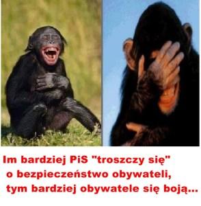 Kopia (3) Kaczyński - małpy