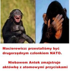 Kopia (7) Kaczyński - małpy