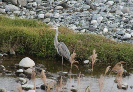 日本野鳥の会 神奈川支部会員の解説付き 『2016 冬の野鳥観察会』