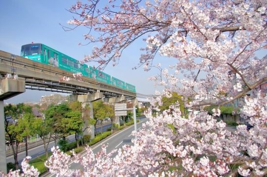 鉄道花見(湘南モノレールはつりさげ式だよ)