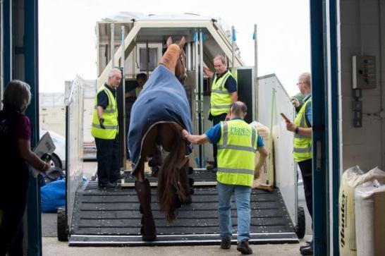 お馬さんも特別貨物機でリオに向かう