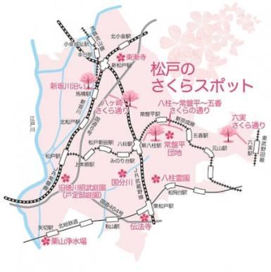 松戸市のさくらスポット