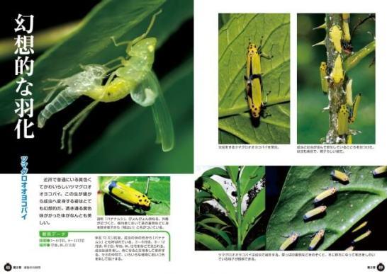 昆虫のすごい瞬間図鑑 - 誠文堂新光社