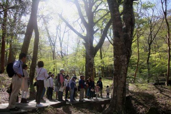 夏休み自然観察会