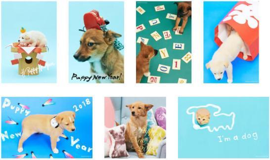 #PUPPY NEW YEARをオープン - NPO法人犬と猫のためのライフボート