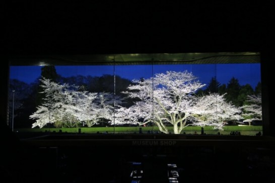 歴博エントランスホールから臨む「夜桜屏風」