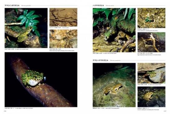 生態写真ページ1