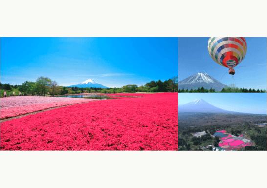 富士山麓に春の訪れを告げる絶景花イベント 「2019富士芝桜まつり」 4月13日(土)開幕