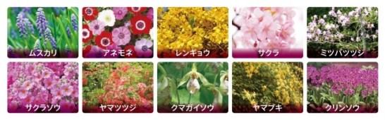 芝桜以外にも様々な花を鑑賞できます