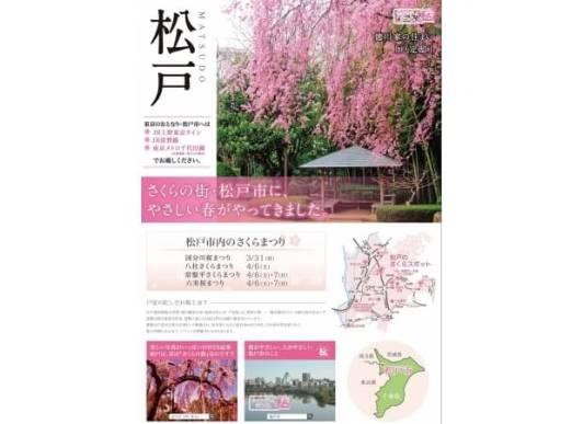 「やさしい春」をお届け!東京のおとなり、さくらの街・松戸市をPR!