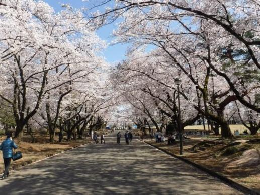 埼玉県営狭山稲荷山公園
