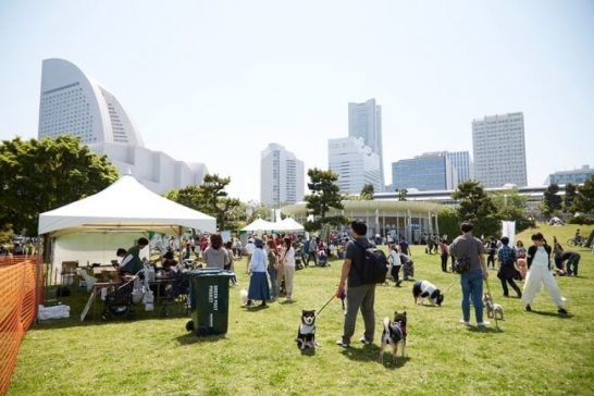 anicom Presents 横浜ドッグウィーク2019 春