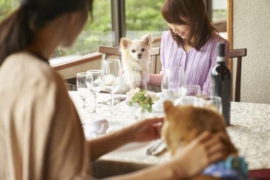 愛犬用お食事メニュー
