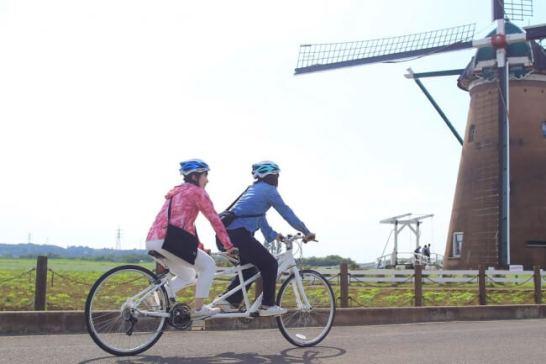 風車のひまわりガーデン - 佐倉ふるさと広場