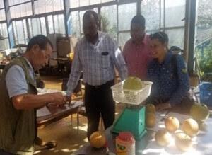 ドミニカ共和国との梨の交流