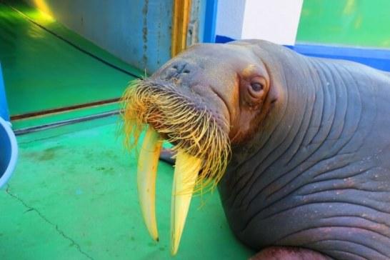 トリップアドバイザーの口コミで人気!日本の動物園・水族館ランキング2019