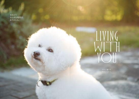 犬のための 家庭の医学