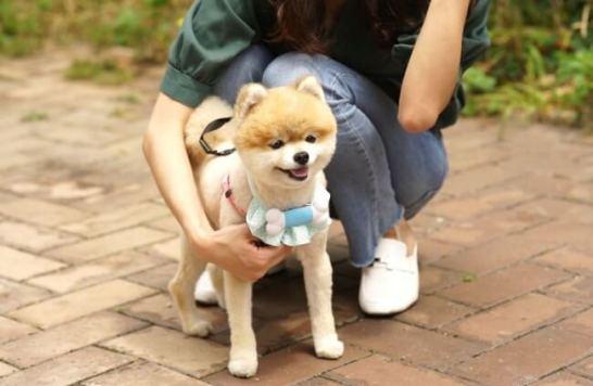 犬用音楽プレイヤーPEPPI3(ペッピー3)