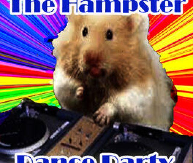 Hampster Dance Djs The Hampster Dance Party